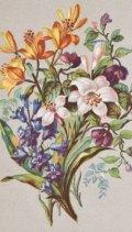 Colour plate from Le véritable langage des fleurs par Mme Anaïs de Neuville, 1863