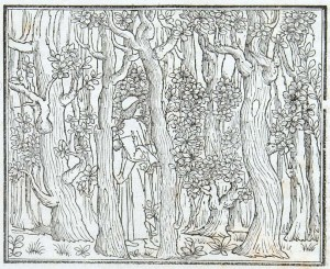Woodcut showing Poliphilo in a dark forest. Folio a3v from the 'Hypnerotomachia Poliphili'. Sp Coll Hunterian Bh.2.14.