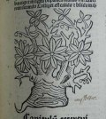 Woodcut of mistletoe