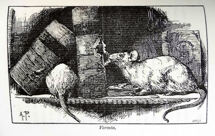 "Some unwelcome furry visitors from Blades's ""The enemies of books"" (Sp Coll Mu30-f.25)"