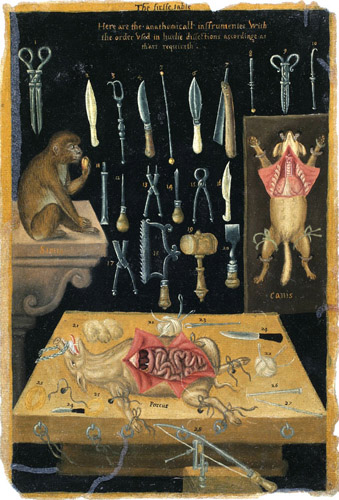 Anatomical instruments and vivisection