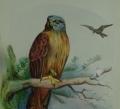 eaglecrop