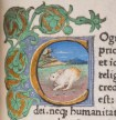 Bunny from Lactantius