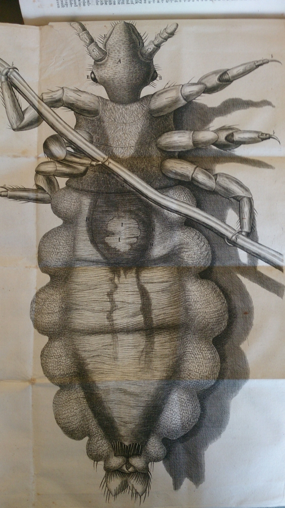 Louse from Hooke's 'Micrographia' Sp Coll Hunterian M.3.1