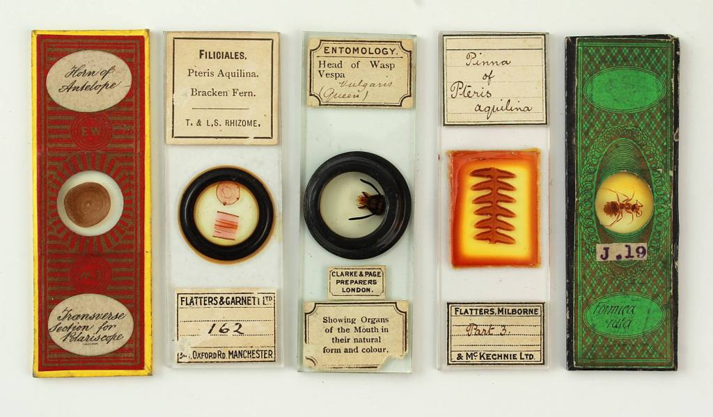 Some premade microscopic slides (image courtesy of Josh Jukes, Semley Auctioneers, Shaftesbury, Dorset)