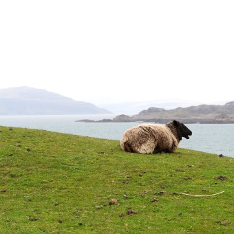 View to Mull