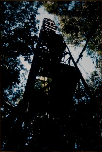 Haddow's steel tower in the Zika Forest (DC68/80/62)