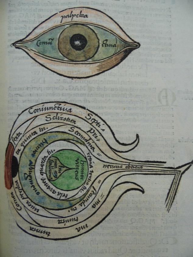 MP_eye