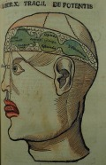 Diagram of the human brain representing the traditional medieval and early Renaissance conceptions of the structure of the human brain and its mental faculties