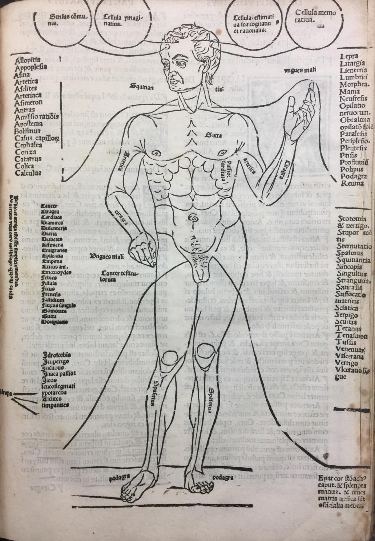 Anatomy_Terminology