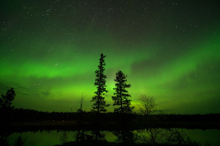 The Northern Lights with tall trees silhouetted
