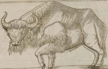 Woodcut of a bison
